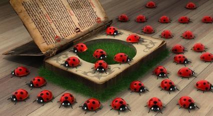 ladybug-2027690_1920